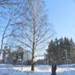 Björk med snö på grenarna