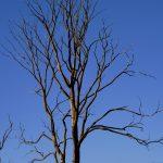 Torr trädet några månader tidigare