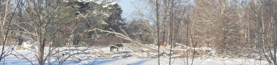 Häst bakom ett fallet träd